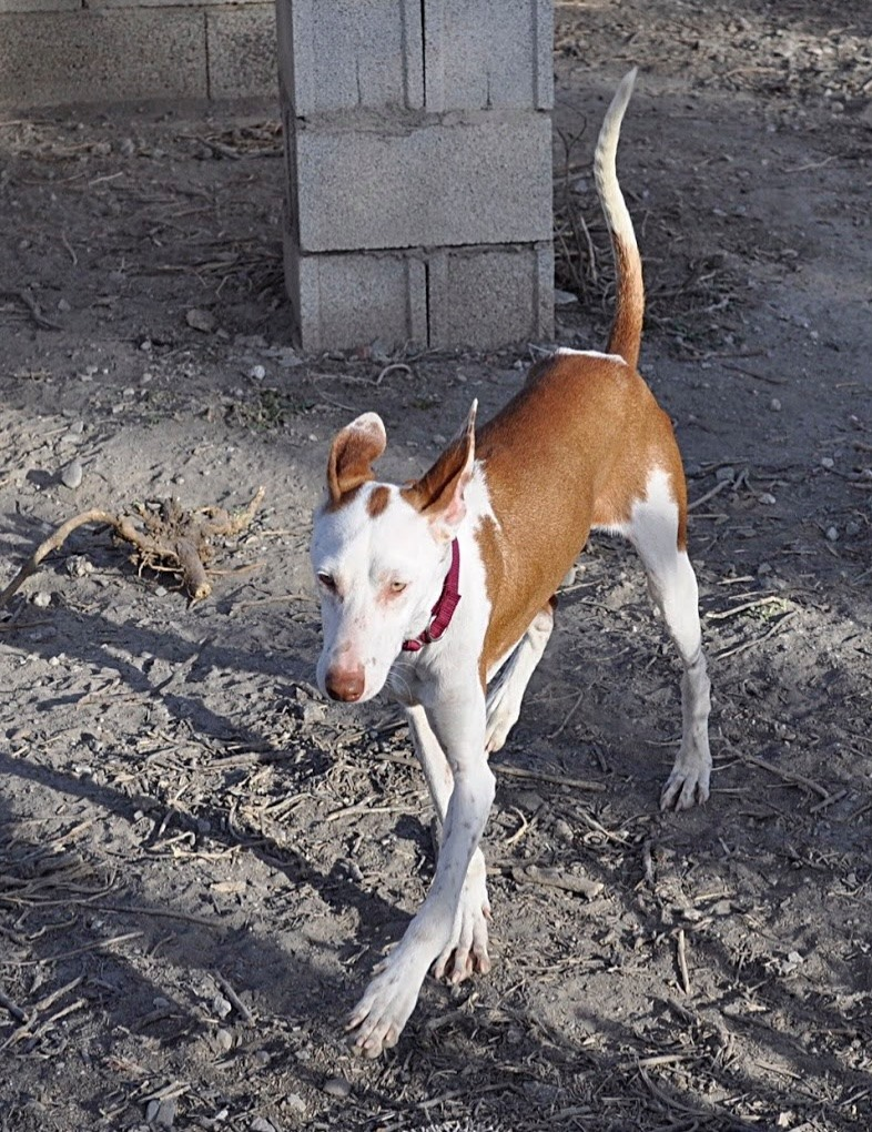 MARCO (reserved)