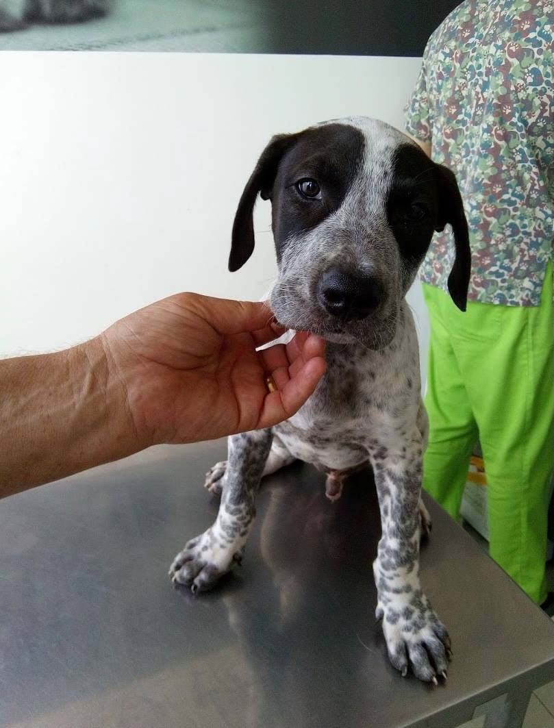 OBIE …Mix breed puppy(RESERVED)